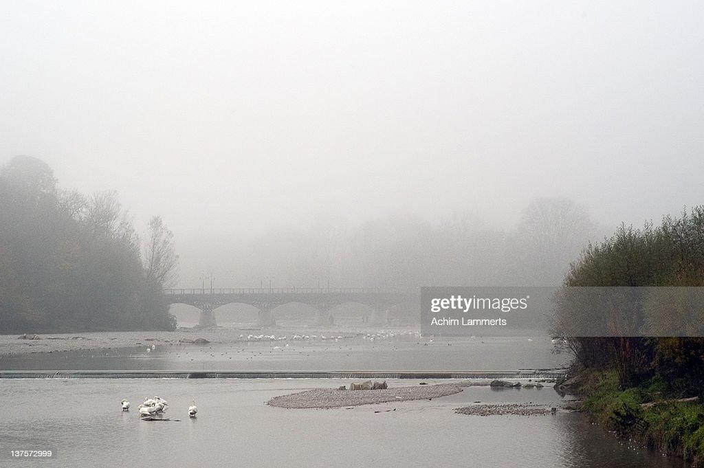 Ducks and birds in river : Stock-Foto