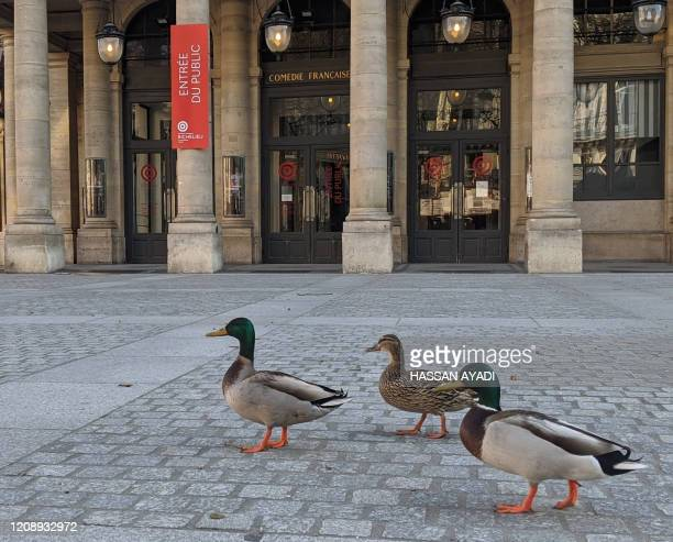 TOPSHOT Ducks are pictured in front of the Comedie Francaise Place Colette in Paris on April 2 2020 on the seventeenth day of a strict lockdown in...