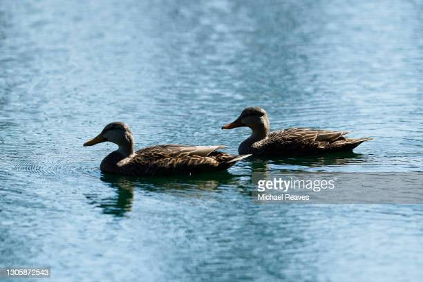 Ducks as seen on the 11th hole during the final round of the LPGA Drive On Championship at Golden Ocala Golf Club on March 07, 2021 in Ocala, Florida.
