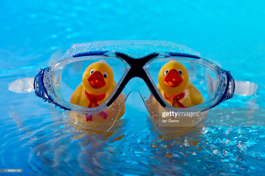 Ducks Behing Swim Goggles : Stock Photo
