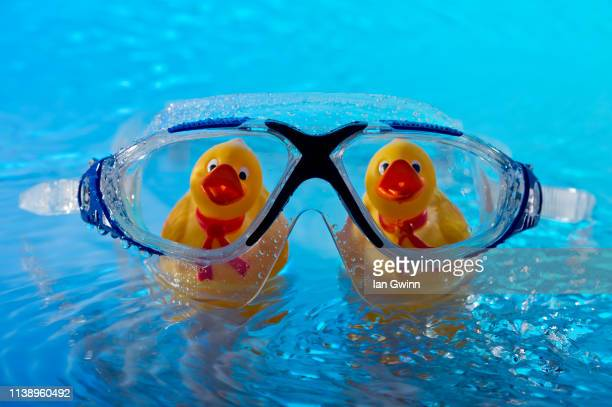ducks behing swim goggles - ian gwinn stock photos and pictures