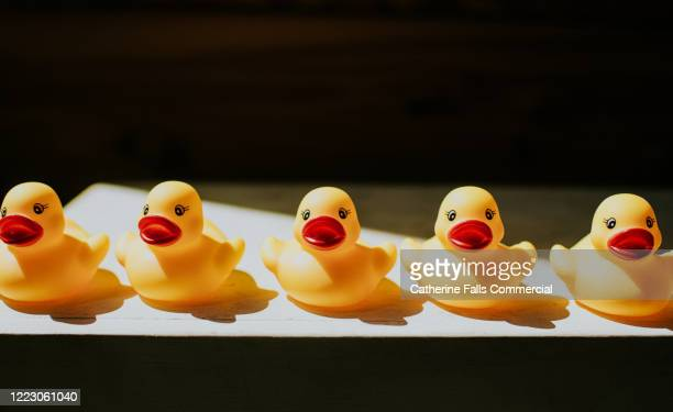 ducks in a row - animal crossing stock pictures, royalty-free photos & images