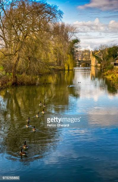 ducks in a row - renzo gherardi stock photos and pictures