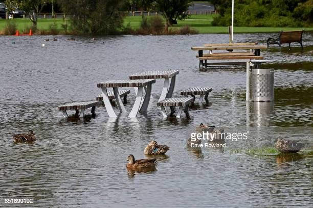 Ducks in their element as picnic tables are submerged under flood water in Onepoto Domain on March 11 2017 in Auckland New Zealand The Tasman tempest...