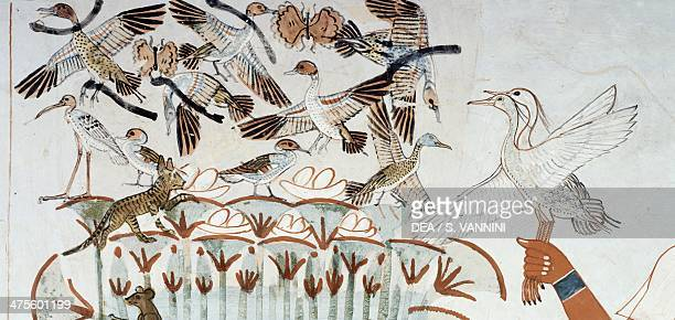 Ducks nests butterflies cats and rodents detail from the scene of hunting and fishing in the marshes fresco north wall longitudinal chamber Theban...