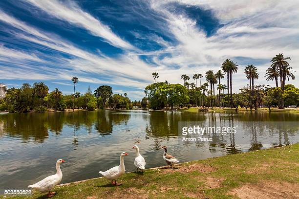 Ducks on the lake in the park, Buenos Aires