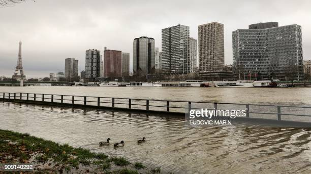 Ducks swim on the flooded banks of the river Seine in Paris on January 23 2018 near the Eiffel tower and the Beaugrenelle district towers as the...