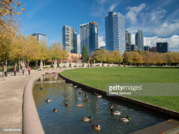 ducks swimming in pond in bellevue downtown park, bellevue, king county, washington state, usa - bellevue skyline stock pictures, royalty-free photos & images