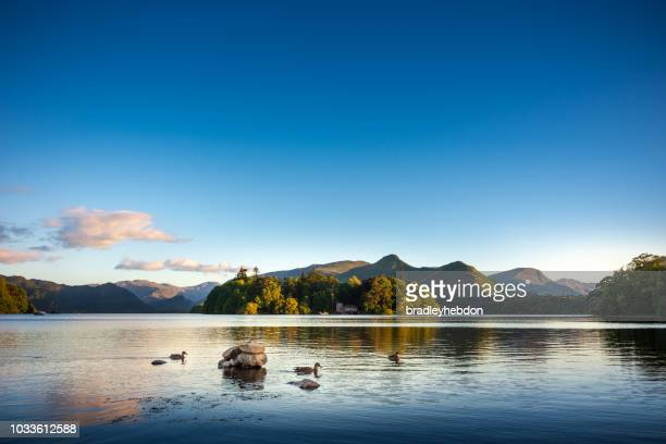 ducks swimming on lake derwentwater near keswick, england - cumbria stock pictures, royalty-free photos & images