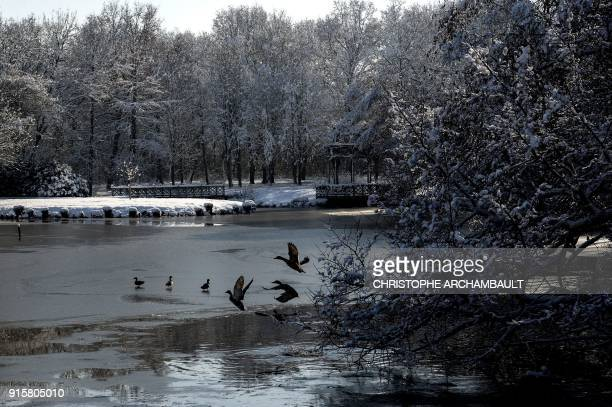 Ducks take off from the partiallyfrozen lake located by the castle of Chamerolles near Orleans some 120 km south of Paris on February 8 2018 / AFP...
