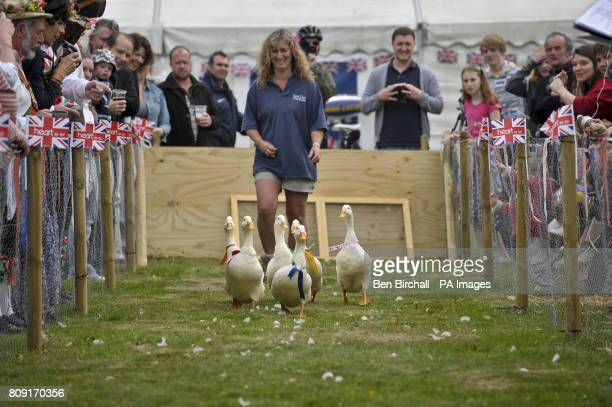 Ducks take part in the big duck race on Chapel Row village green the home village of Kate Middleton near Bucklebury during royal wedding celebrations