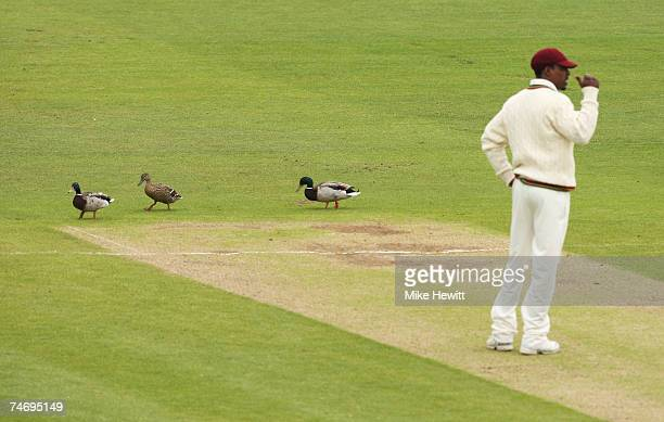 Ducks walk onto the pitch during day four of the Fourth Test match between England and the West Indies at the Riverside Ground on June 18 2007 in...