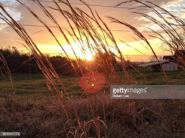 Dudley Shoals Grassland
