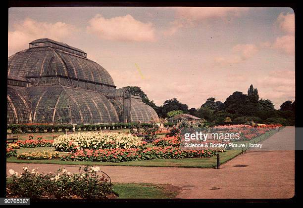 Dufaycolor colour transparency of The Palm House in Kew Gardens London taken by an unknown photographer in about 1945 This huge 110 metre long...