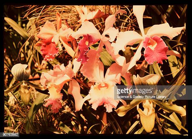Dufaycolor colour transparency taken by an unknown photographer in about 1940 The Dufaycolor process was introduced as cine film in 1932 and as...
