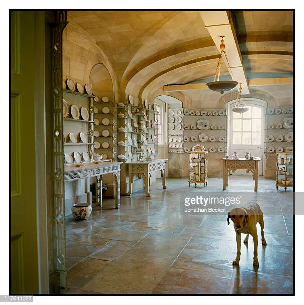 Duke of Marlborough's Blenheim Palace Jerry a fouryear old yellow lab is photographed in the China Room for Vanity Fair Magazine on October 2527 2010...