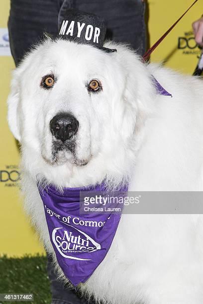 Duke The Mayor arrives at The World Dog Awards at Barker Hangar on January 10 2015 in Santa Monica California
