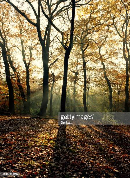 dulwich woods 3 - dulwich stock photos and pictures