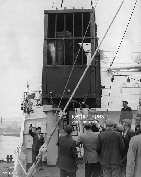 Dumbo the elephant is loaded onto the Russian ship Pulkovo at Surrey Commercial Docks, 3rd September 1958. She is being sent from her home at London...