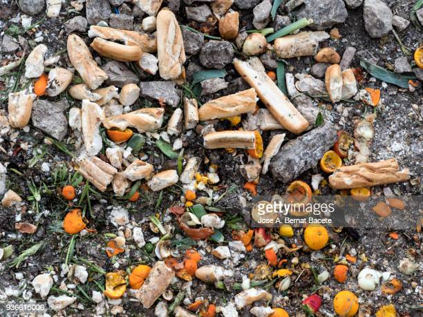 Dump of organic garbages with remains of fruits and bread in decomposition.