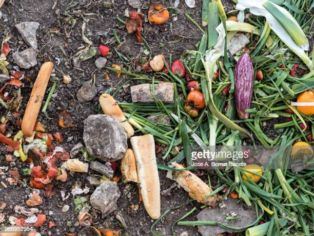 dump of organic garbages with remains of fruits and bread in decomposition. - food contamination stock photos and pictures