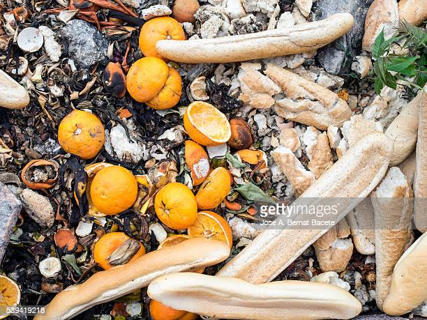 Dump outdoors with oranges and loafs in decomposition