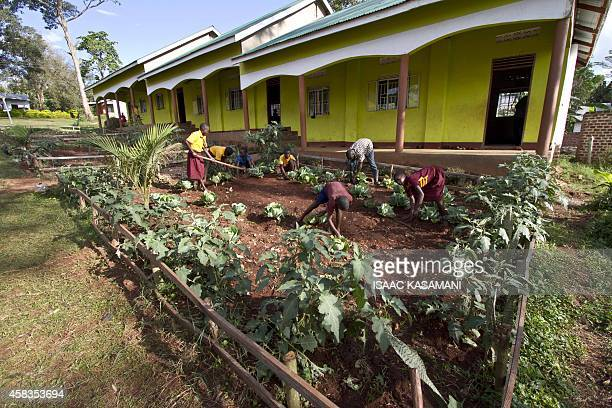 Duncan Senoga a volunteer with Slow food International in Uganda helps pupils of Buiga Sunrise Primary School in Mukono District Uganda on October 2...