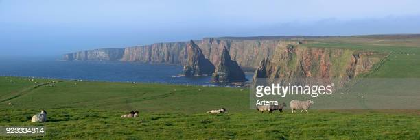 Duncansby Stacks rock pinnacles south of Duncansby Head near John o' Groats Caithness Highland Scottish Highlands Scotland UK