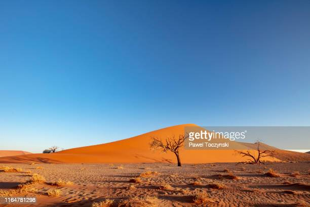 dune 45 in sossuvlei park at sunset, namibia, 2018 - dry stock pictures, royalty-free photos & images