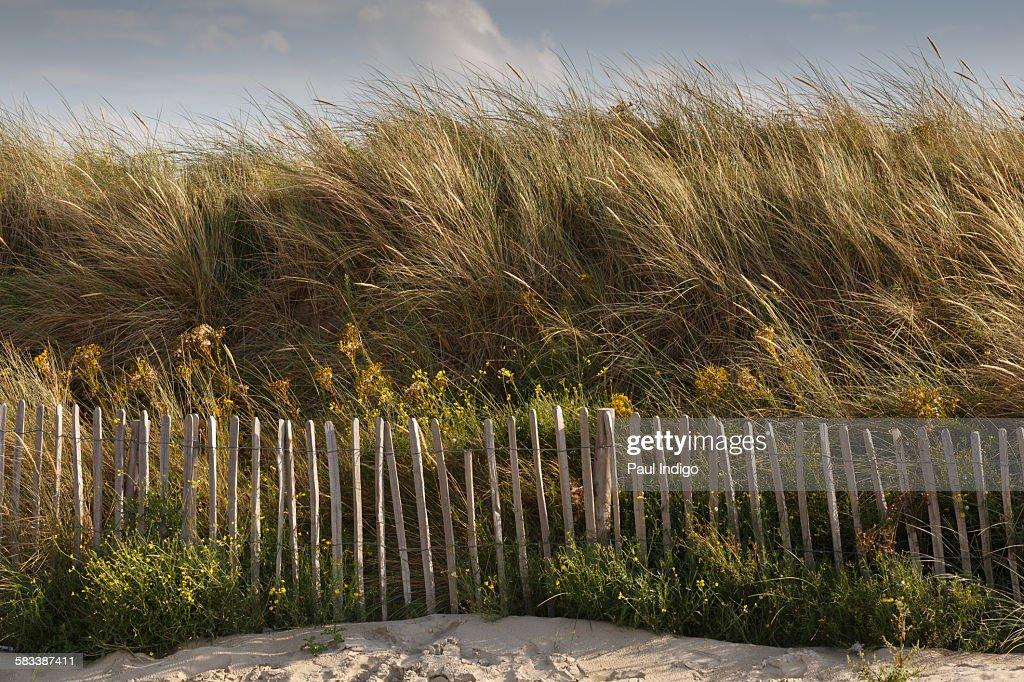 Dune fence : Stock Photo