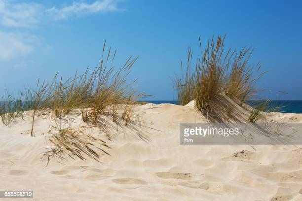 Dune grass on the beach of mediterranean sea