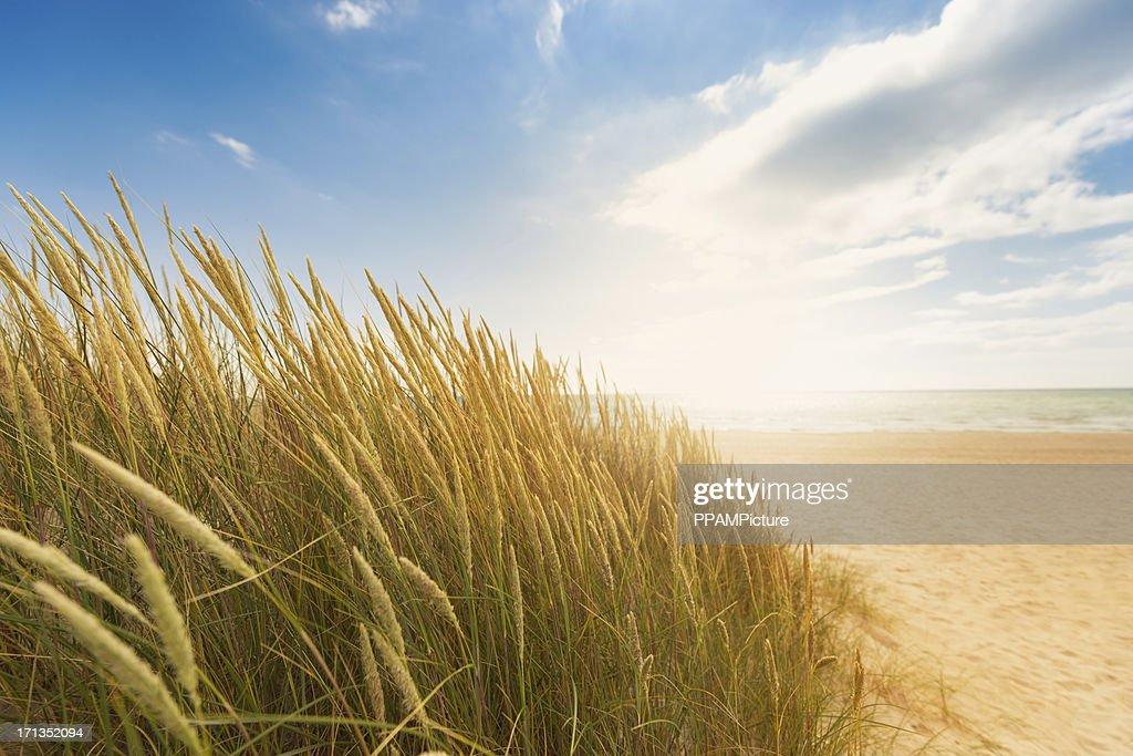 Gras der Dünen am Strand : Stock-Foto