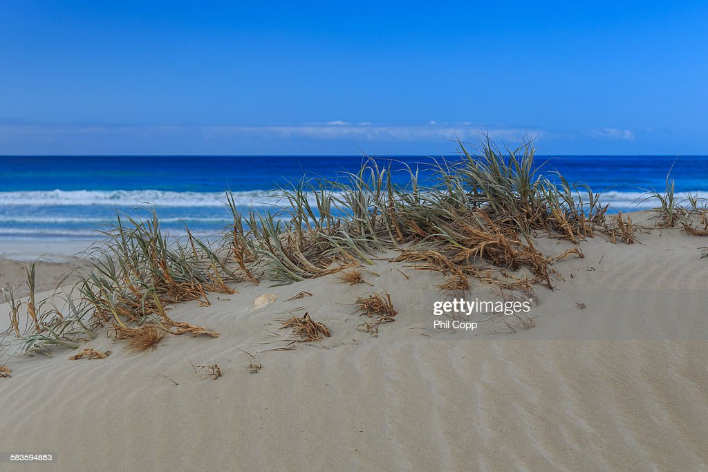 Dune Grass : Stock Photo