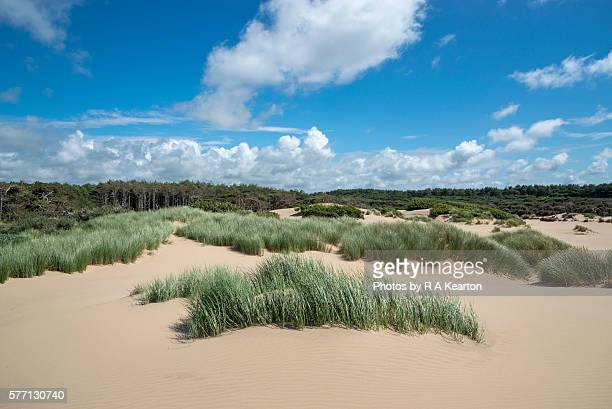 dune grasses and pine forest at formby point, merseyside, england - merseyside stock pictures, royalty-free photos & images