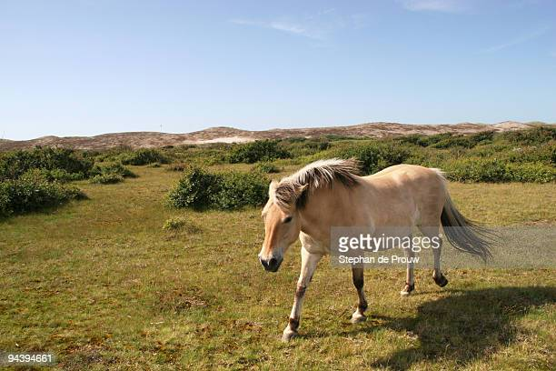 dune horse - stephan de prouw stock pictures, royalty-free photos & images