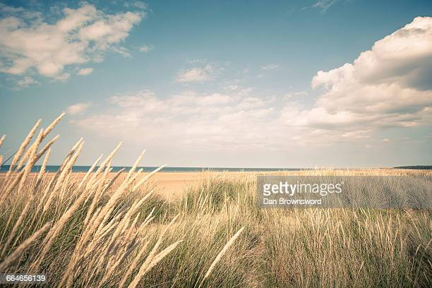 Dune marram grasses and view of sea, Norfolk, UK