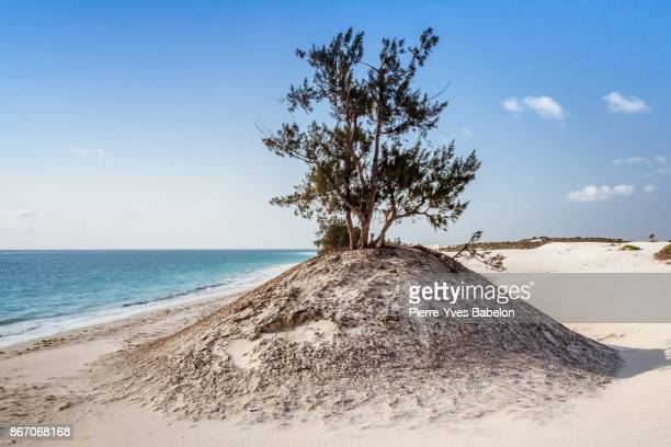 dune on a wild beach - pierre yves babelon stock pictures, royalty-free photos & images