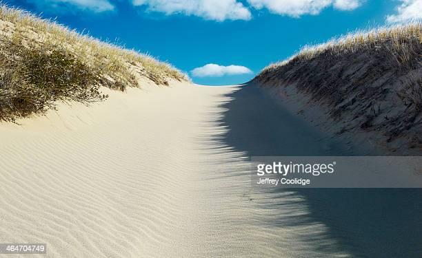 Dune Path Cape Cod