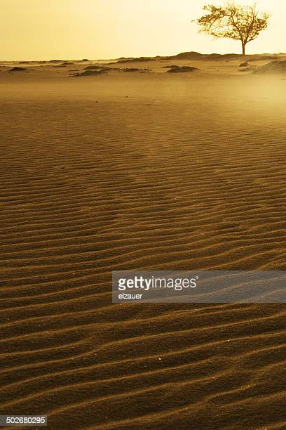 dune - barreirinhas stock pictures, royalty-free photos & images