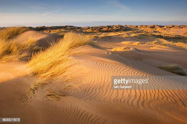 dune system on forvie national nature reserve - aberdeenshire stock pictures, royalty-free photos & images