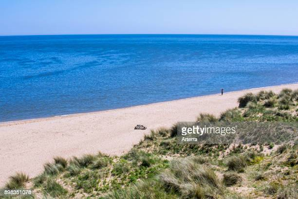 Dunes and beach at Forvie National Nature Reserve / Sands of Forvie, Newburgh, Aberdeenshire, Scotland, United Kingdom.
