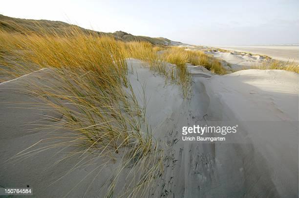 Dunes at the northsea island Juist