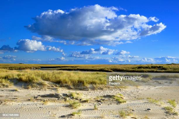 Dunes in front of salt marsh with blue sky and cumulus clouds, Sankt Peter-Ording, Schleswig-Holstein Wadden Sea National Park, North Frisia, Schleswig-Holstein, Germany