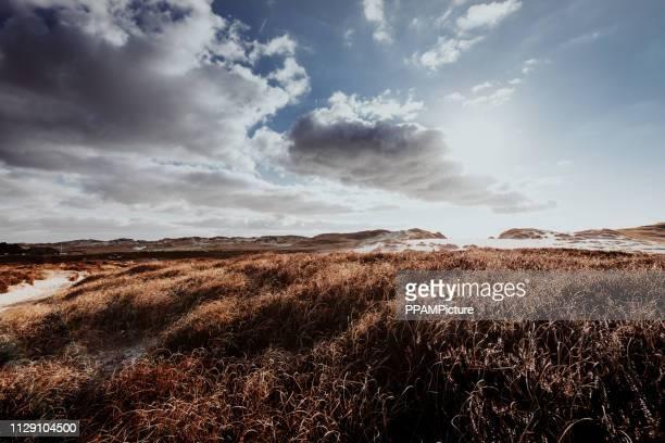 dünen im winter - dramatischer himmel stock-fotos und bilder