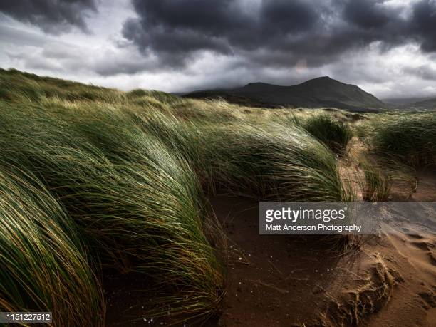 dunes of fermoyle - wind stock-fotos und bilder