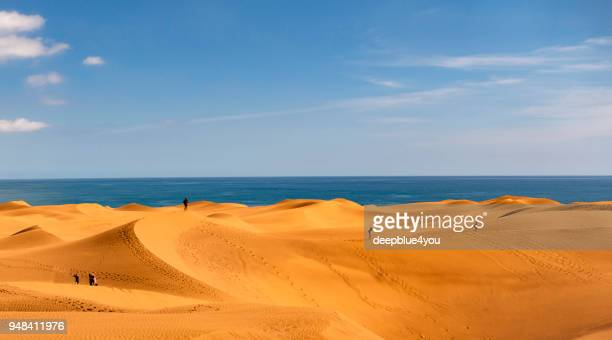 dunes of maspalomas - canary islands, spain - grand canary stock pictures, royalty-free photos & images