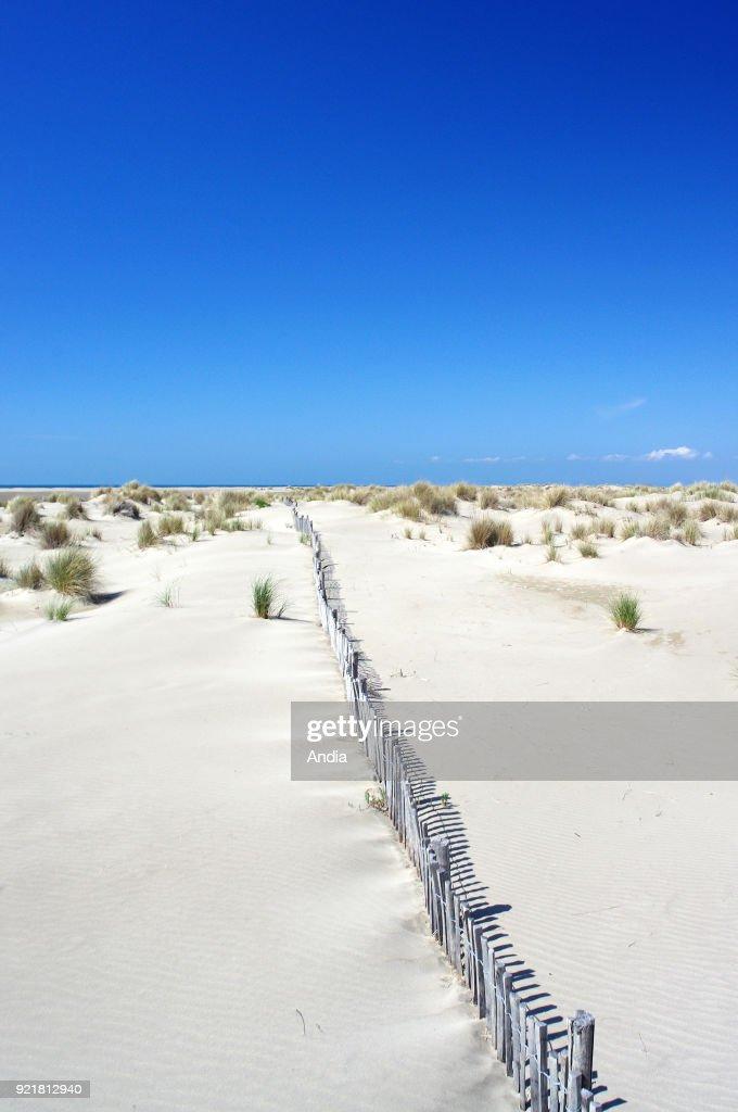 Dunes of the 'Pointe de l'Espiguette' headland in Le Grau-du-Roi. : News Photo