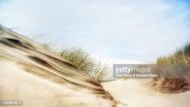dunes on the isle of sylt with blue sky - tina terras michael walter stock-fotos und bilder