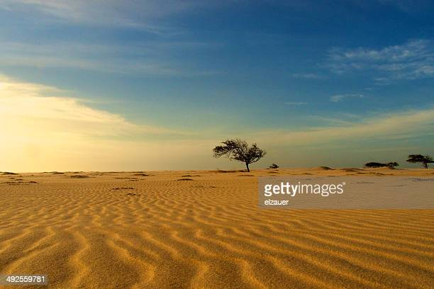 dunes. - barreirinhas stock pictures, royalty-free photos & images