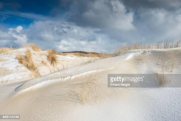 dunes with beach grass and snow, north sea, langeoog, east frisia, lower saxony, germany - insel langeoog stock-fotos und bilder